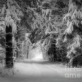 Celestial Light in Winter by Jan Mulherin