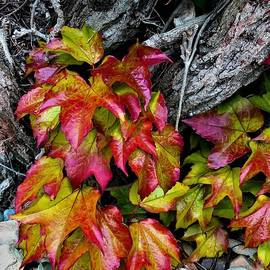 Celtic Autumn by Shari Stamford Krause