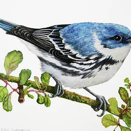 Cerulean Warbler by Linda Apple