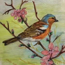 Chaffinch - Pencil Drawing by Lesley Evered