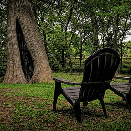 Chairs By The Cypress Tree by Judy Vincent