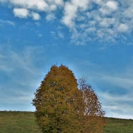 Changing Seasons by Carol McGrath