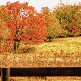 Changing Seasons of Chester County by Susan Maxwell Schmidt