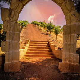 Chapel On The Hill Vineyard by Mitch Shindelbower