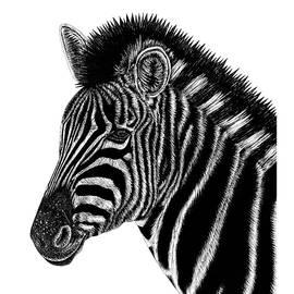 Chapman's zebra by Loren Dowding