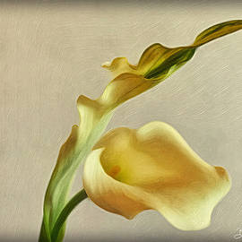 Charisma  by Barbara Zahno