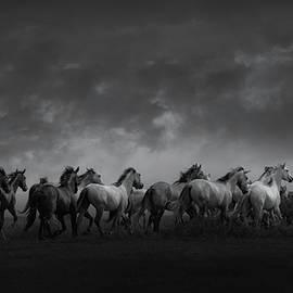 Chasing Spirits by Kristi Johnson