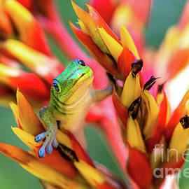 Cheerful Greetings from a Day Gecko in Honolulu Hawaii by Phillip Espinasse