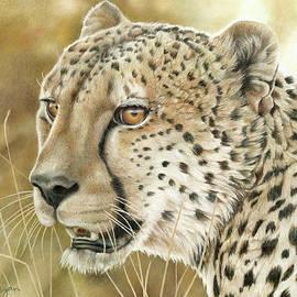 Cheetah Portrait by Laura Regan