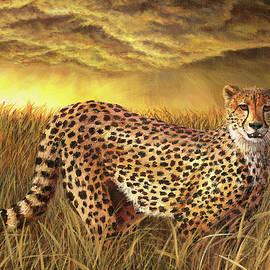 Cheetah by Steph Moraca