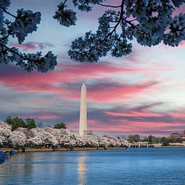 Cherry Blossoms by Derek Winters