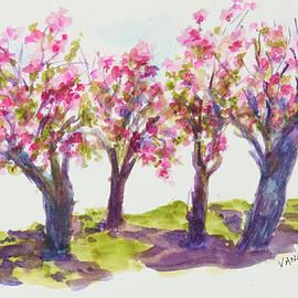 Cherry Blossoms - Kariya Park