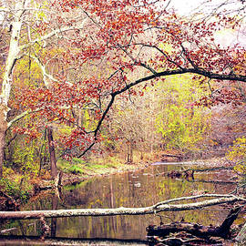 Chester County Creek by Susan Maxwell Schmidt
