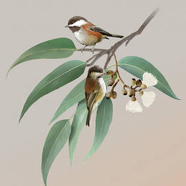 Chickadees and Eucalyptus by Spadecaller