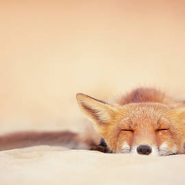 Chill Fox Series- Chill Like a Fox by Roeselien Raimond