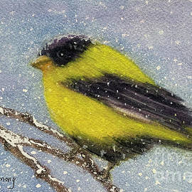 Chilly Goldfinch by Sue Carmony