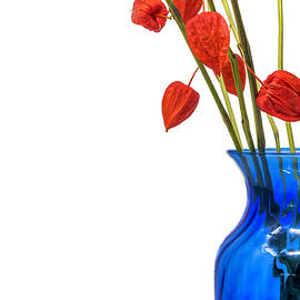 Chinese Lanterns by Sandi Kroll