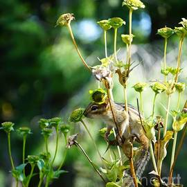 Chipmunk Scouting At His Cup Plant Tower by Maria Faria Rodrigues