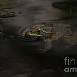 Chiricahua Leopard Frog by Ruth Jolly