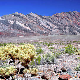 Cholla Cactus And Pyramid Peak, Death Valley National Park by Douglas Taylor