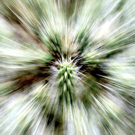 Cholla Cactus Spines Abstract by Douglas Taylor