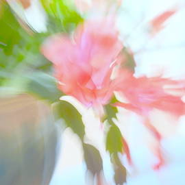 Christmas Cactus by Lisa Poulos Williams