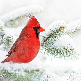 Christmas Cardinal by Christina Rollo