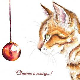 Tabby Cat and Bauble - Christmas IS Coming 1 by Debra Hall