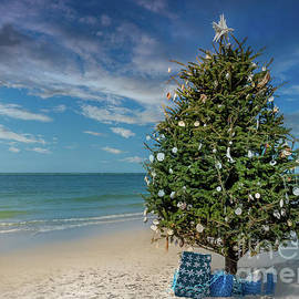 Christmas Tree on Siesta Key Beach, Florida by Liesl Walsh