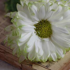 Chrysanthemum on Vintage Book Still Life by Taphath Foose