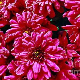 Chrysanthemum by Yorgos Daskalakis