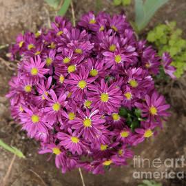 Chrysanthemums by PROMedias Obray