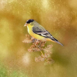 Cinch to be a Finch by Donna Kennedy