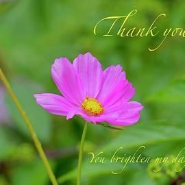 Thank You, Cosmos by Alida M Haslett