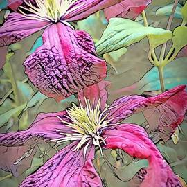 Climbing Pink Clematis  by Mo Barton