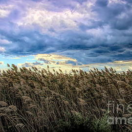 Clouds and Common Reeds by Karen Silvestri