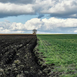 Clouds, field and a lonely tree by Gergana Chakarova