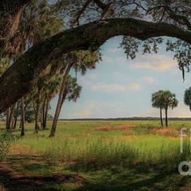 Clyde Butcher's Tree, Myakka River State Park, Florida by Liesl Walsh