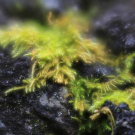 Coast Fern ... by Judy Foote-Belleci
