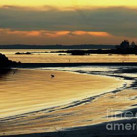 Coastal Seascape Beauty by Carol F Austin