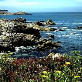 Coastal Beauty  by Michael Klahr