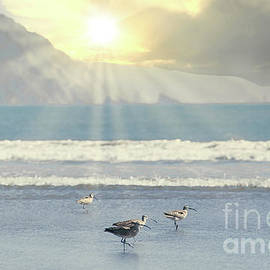 Coastal Whimbrels At Crescent Beach by Michele Hancock Photography