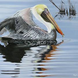 Cocodrie Pelican by Phyllis Beiser