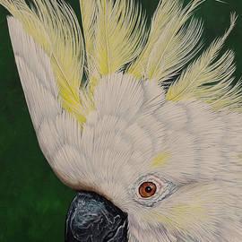 Cockatoo portrait 2 by Debra Dickson