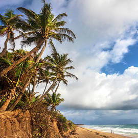 Coconut Palm Trees at the Beach by Debra and Dave Vanderlaan