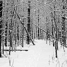 Cold And Crisp Black And White by Debbie Oppermann