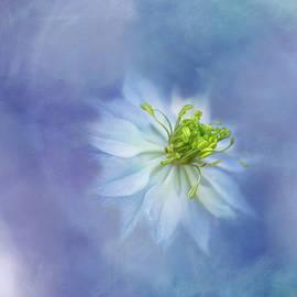 Cold Blue Nigella by Terry Davis