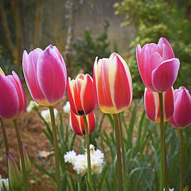 Color Explosion - Tulips 002 by George Bostian