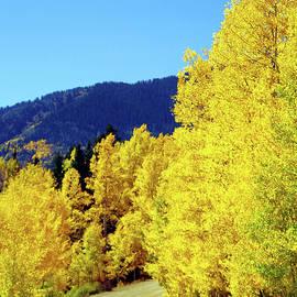 Colorado Country Road by Douglas Taylor