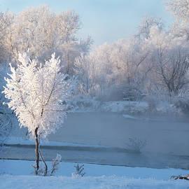 Colorado White Magic by Judi Dressler